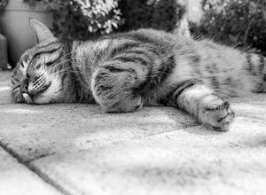 Techniques de relaxation: méditation et respiration